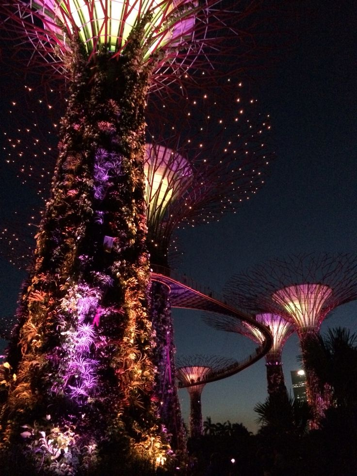 Super Trees | Gardens by the Bay | Singapore