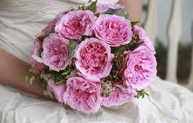 """Miranda"" David Austen roses"