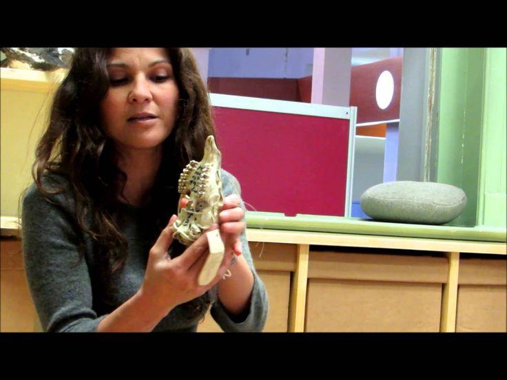 Actividad didáctica del Museo de Historia Natural de Valparaiso contada por Andrea Vivar del área educativa.