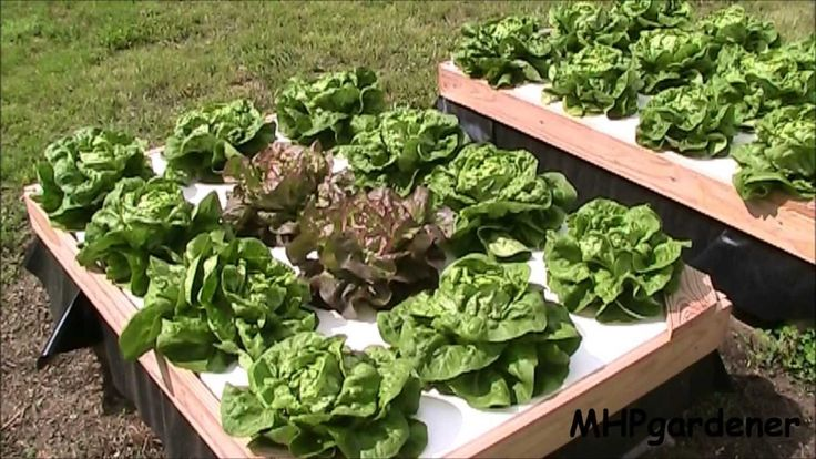 Growing Hydroponic Lettuce Outside with No Electricity (+playlist)
