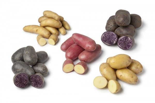 Potato Varieties: How to choose the best potato - Produce Made Simple