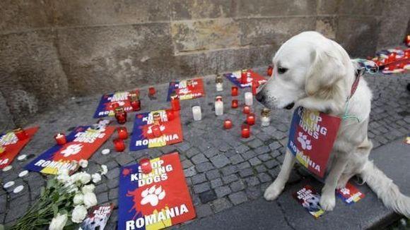 Verehrter Klaus Iohannis, Tierschützer aus aller Welt gratulieren Ihnen zum Wahlsieg und möchten Sie an ihre eigenen Wahlversprechen erinnern.      Wir fordern hiermit den barbarischen Hundemord in Rumänien mit sofortiger Wirkung zu STOPPEN!  Wir werden nicht aufhören zu protestieren bis Tierschutzgesetze und Respekt gegenüber den Tieren auch in Rumänien zur Tagespolitik gehören werden.    Bitte nehmen Sie unsere Unterschriften entgegen und zeigen Sie der Welt, dass Rumänien endlich den ...