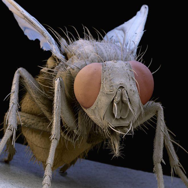 ミクロなモンスター:昆虫の顔をアップで|WIRED.jp