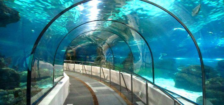 wisata akuarium di Jakarta