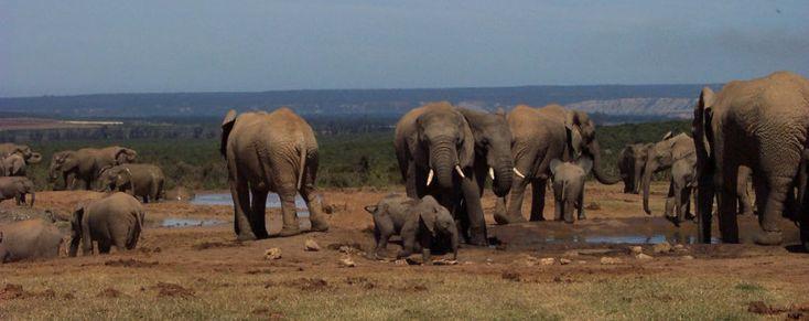 4 Reasons Why The Environment Needs Elephants   GVI