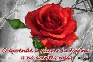 Imágenes De Amor Con Frases Bonitas Con Rosas de arjona