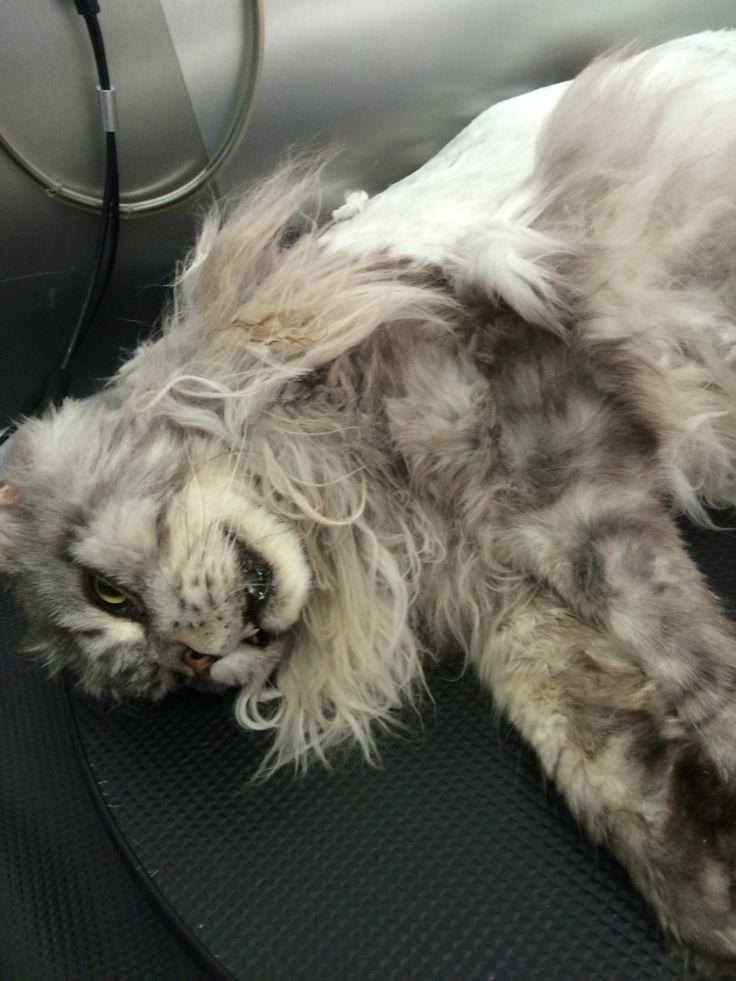 Gato de 11 Kilos