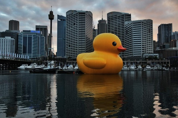 This huge duck will feature as the centrepiece of the Sydney Festival's Day One opening spectacular. The duck's only test run, shown here, occurred on the 3rd of January, 2013. Measuring 15m high and 18m wide, Florentijn Hofman's giant will sail into Cockle Bay in the heart of Darling Harbour on Saturday the 5th of January. This is the latest incarnation of Hofman's famous oversized toy and has been commissioned especially for this year's Sydney Festival. Pictures by Nick Moir. Selected…