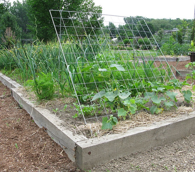 trellises for the vegetable garden for the home