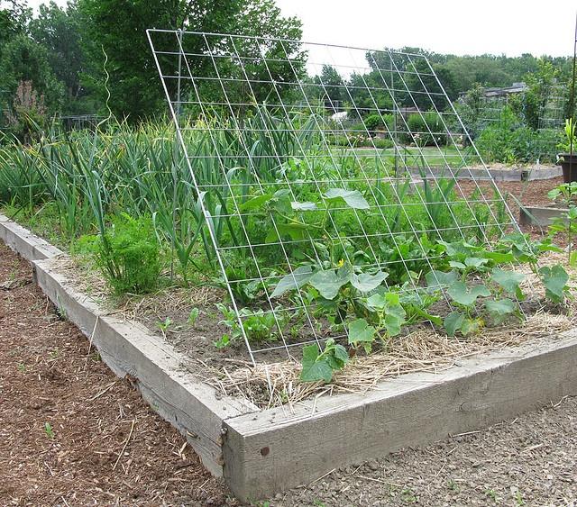 Trellises for the vegetable garden for the home for Vegetable garden trellis