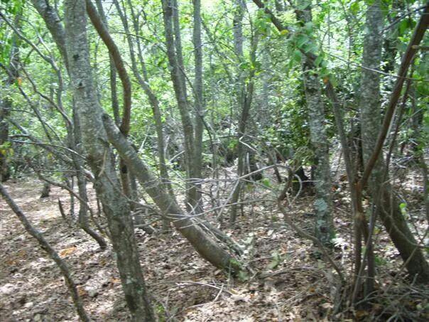 Nos insertamos en un pequeño bosque.