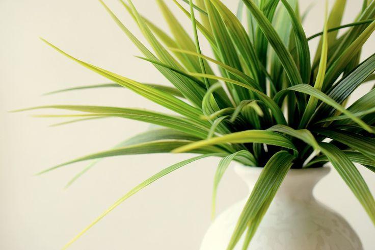 Roślin, W Doniczce, Dekoracyjny, Zielony, Wazon, Groeth