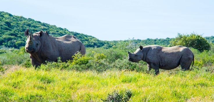 Shamwari game reserve.
