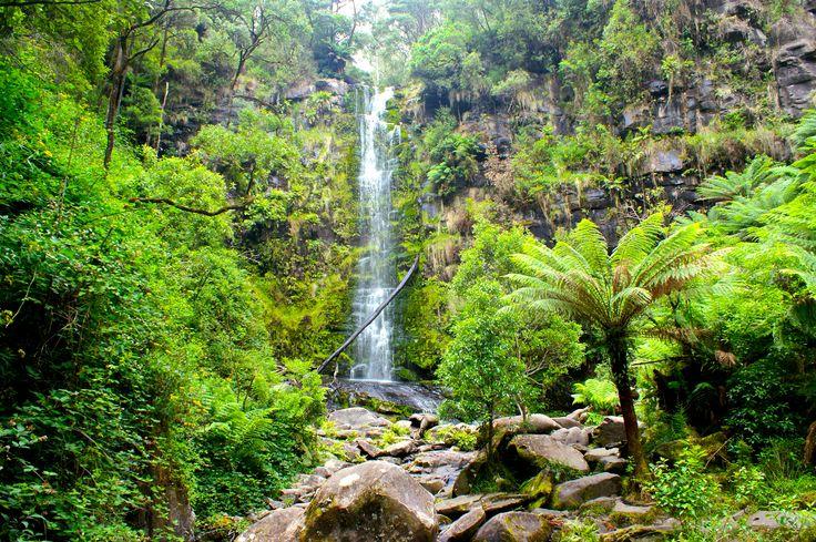 Erskine Falls, proche de Lorne, est la cascade la plus impressionnante situé le long de la Great Ocean Road.