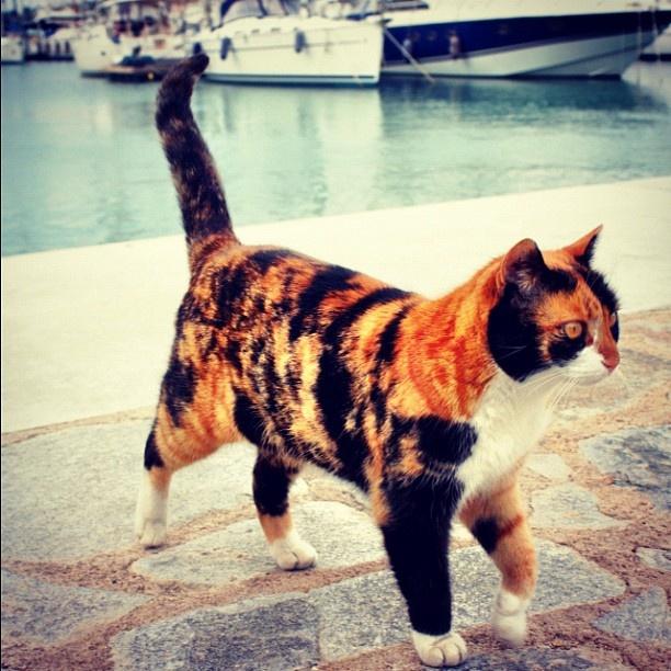 Cesme Marina cat :)