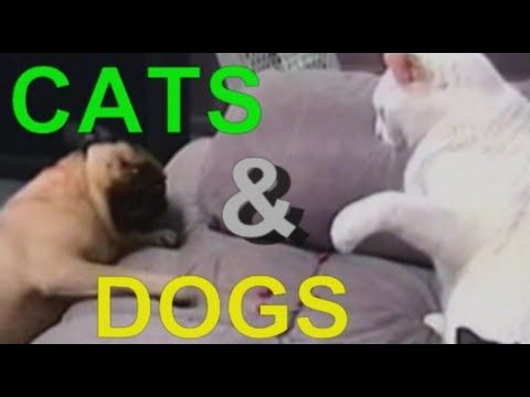 Funny Cat And Dog Photos