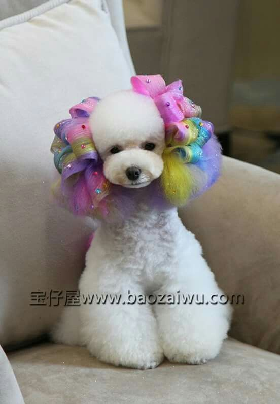 Rainbow | Peluqueria | Pinterest | Rainbows, Poodle and ...