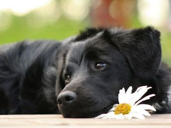 Pinterest- Animali