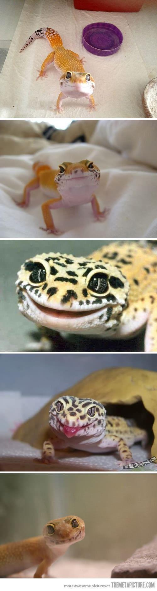 So many happy geckos :D