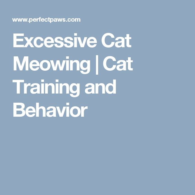 how to stop excessive meowing