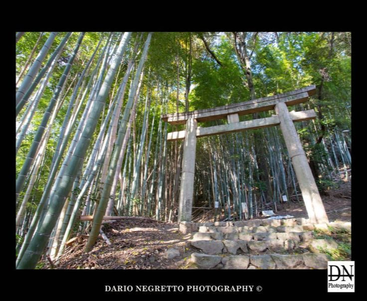 Bamboo & Torii www.darionegrettophotography.com #日本 #京都 #観音寺 #giappone #japan #kyoto #landscapes #asia #beautiful #torii #people #嵐山 #pictureoftheday #picoftheday #canon6d #canon_official #canon_photos #miyagawacho #竹林 #photographer  #travel #pontocho #nightlandscape #landscaper #ig_japan #tokyocameraclub #bambooforest #landscape #landscapephotography #japon