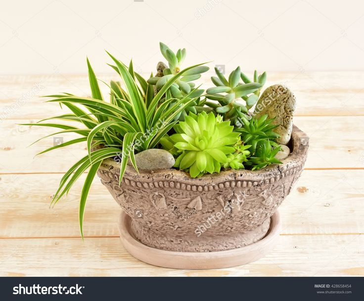 The 14 best Potted plants and flowers photography images on ...