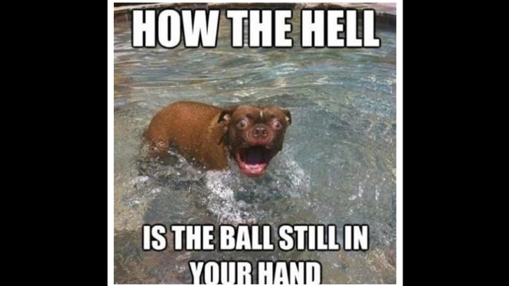 Every dogs reaction...