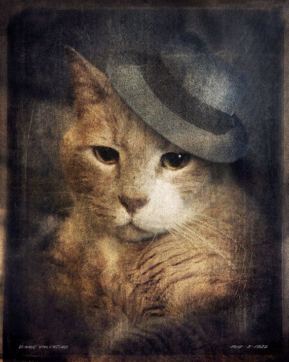 Orange Cat Photo - Animal Photography - Animal Portraits - Fedora art - Gift for Cat Lovers 8x10 Print - Vinnie Valentino
