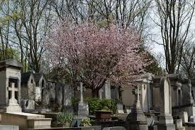 E di fiori odorata arbore amica le ceneri di molli ombre consoli.