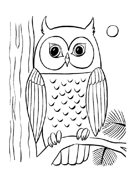 Owl Colouring Pictures For Kids   Coloring Island