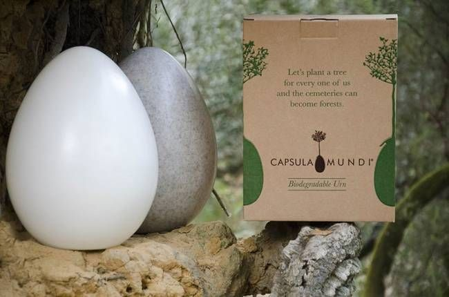 Capsula Mundi burial urn   the Capsula Mundi Urn  is designed to accept the cremation ashes from the deceased, and to then be buried next to an existing tree, or in a hole over which a tree will be planted. The Urn is made from a biodegradable polymer (bioplastic) that will essentially be turned into soil and nutrients for the tree