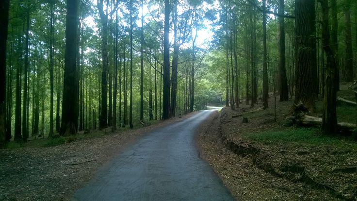 Ohiya - Boralanda Road