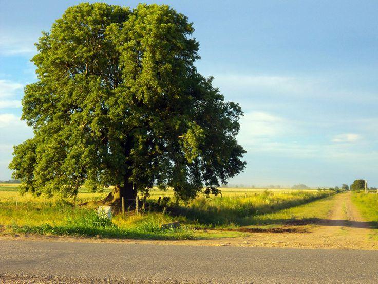 Irigoyen, postales de un pueblo rural