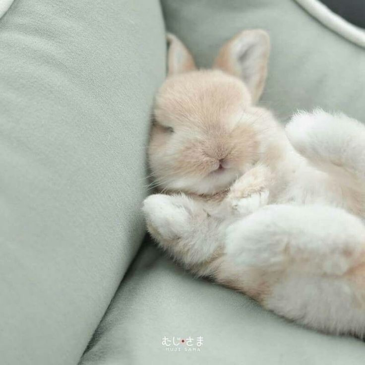 Спящий зайчики картинка