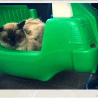 Bad day Ewok? Or should I called you green lantern superhero need a rest.