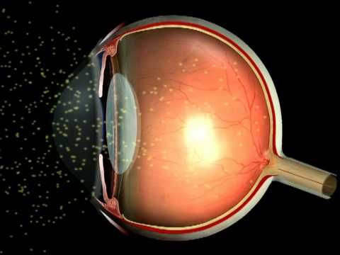 Video for Module 1: How Vision Works. NOTE: THE SPEAKER ...