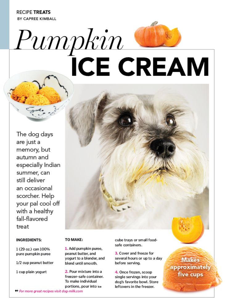 Pumpkin ice cream recipe for dogs (super easy!)