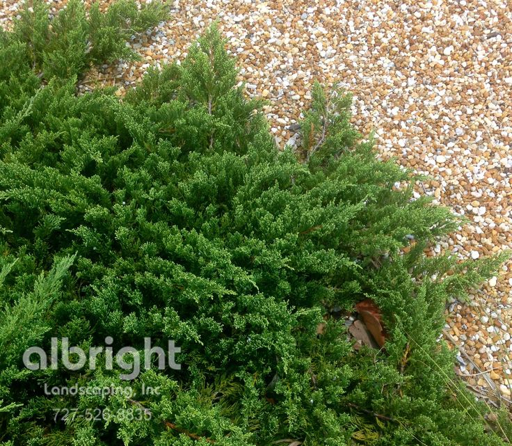 1000 images about front entry landscapes on pinterest for Low growing low maintenance shrubs
