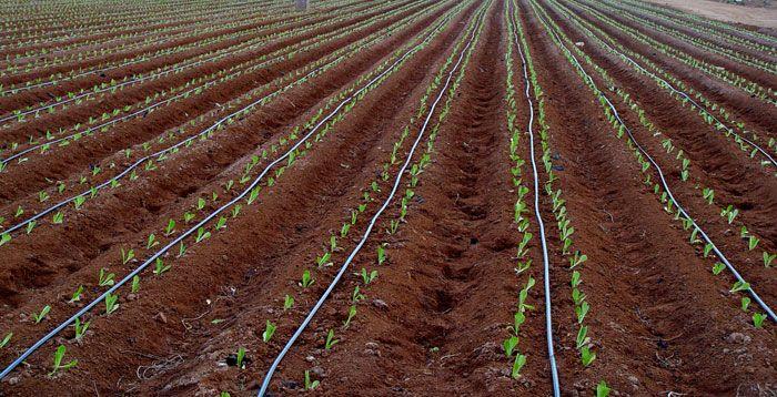 ¿Qué aportan los ácidos húmicos a tus cultivos? Una entrevista a D. Gregorio Murillo, Director-Gerente de la compañía Jiloca Industrial, S.A. (JISA), especializada en la fabricación y comercialización de agronutrientes y cuyos productos son comercializados internacionalmente. - http://www.floresyplantas.net/los-acidos-humicos/