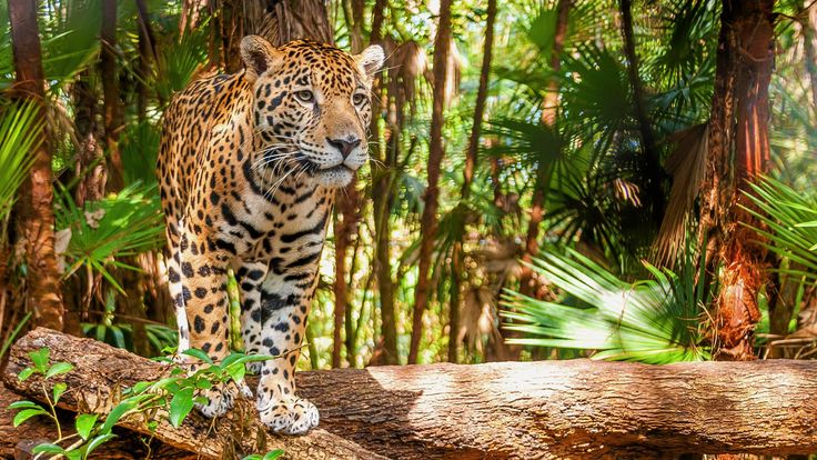 Belize tourism: 5 things to know before you visit  Added by on March 21, 2016