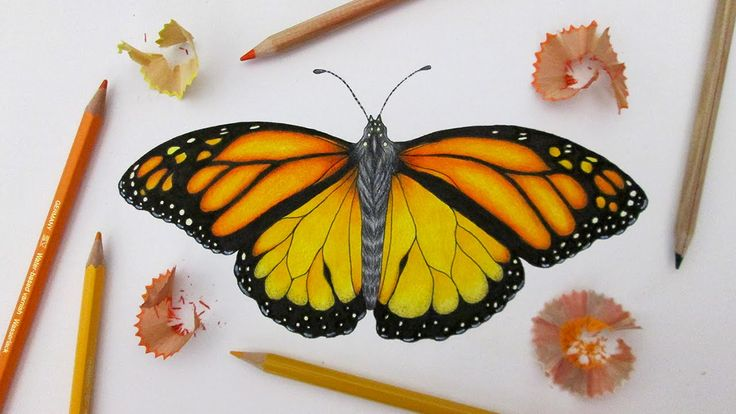 Speed Drawing A Monarch Butterfly