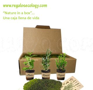 al abrir estas cajas de cartn reciclado le sorprender la fragancia natural del musgo fresco sobre
