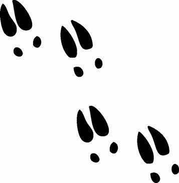 12 best wild animal tracks images on pinterest animal tracks wild rh pinterest com  animal footprint clipart
