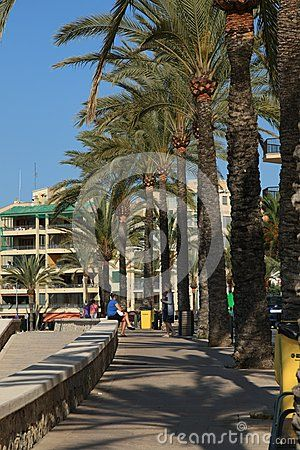 The palm alley in Playa de Palma. Mallorca, Spain