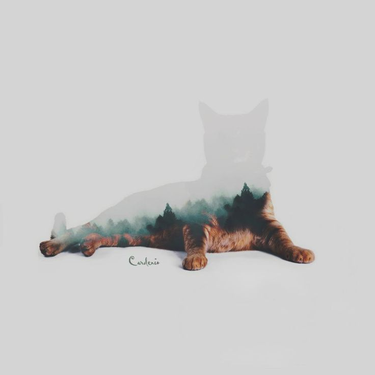 forest cat by cardenio-f dupla exposição | double exposure | fotografia | photography | photoshop
