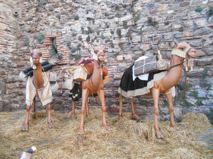 Camellos .Escenario Belén Viviente 2015