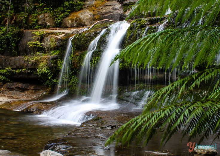Lovely Sport for a picnic luch at Liffey Falls Tasmania, Australia