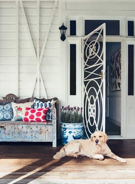 Patterned steel frame door and gorgeous labrador