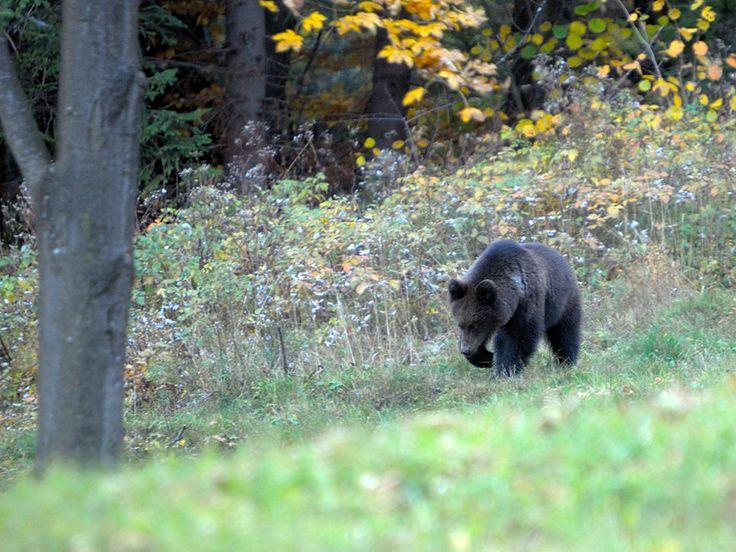 Fotografie Igora Kmeťa - Fotoalbum - Fauna - Cicavce