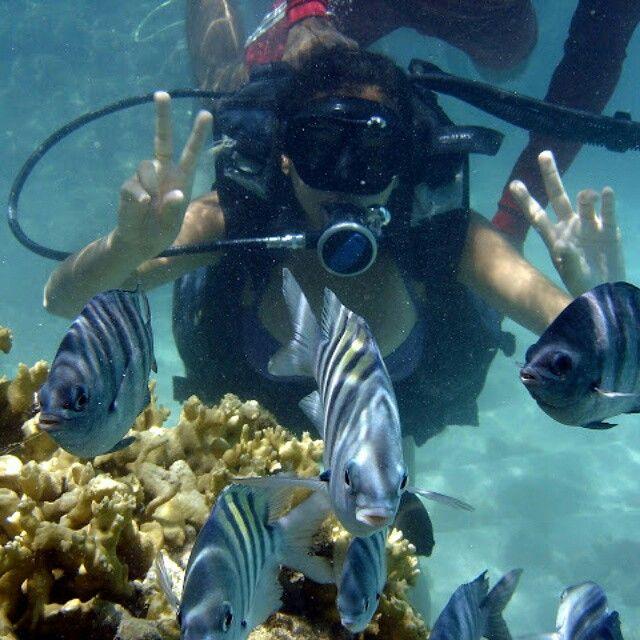 Mergulho em Maragogi, Alagoas.